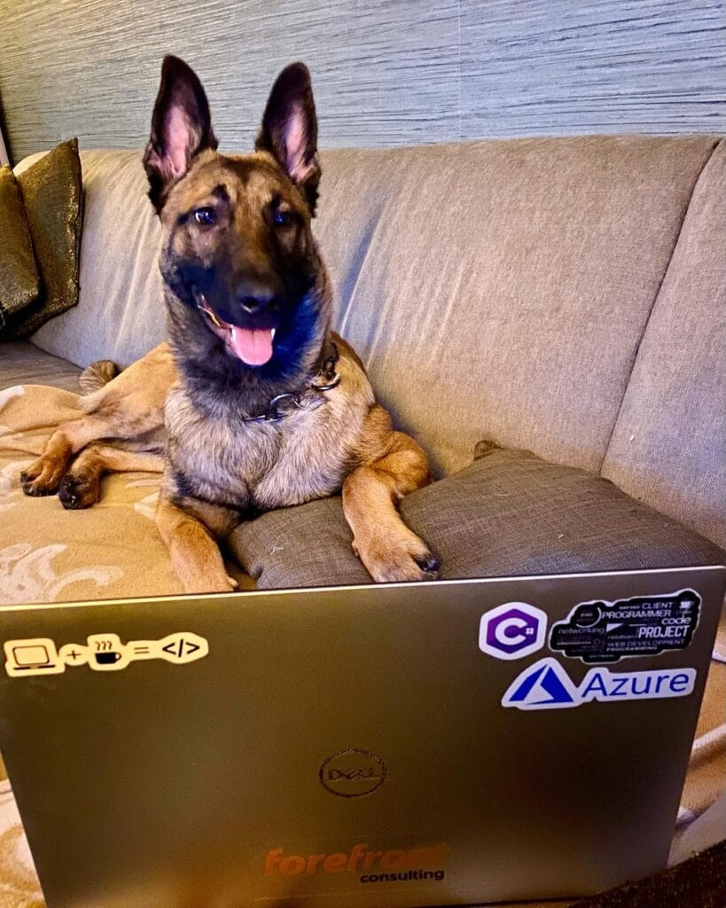 Jonah Andersson's Malinois Dog by her laptop